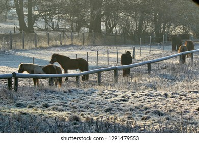Horses on a cold day