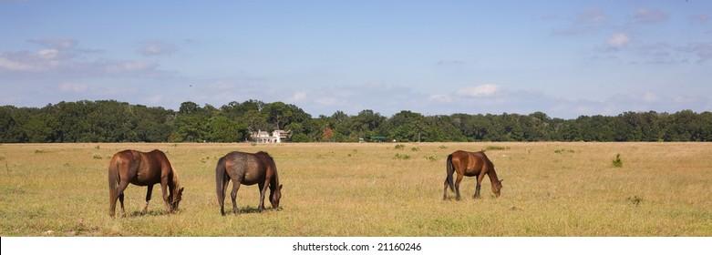Horses on Cumberland Island Georgia
