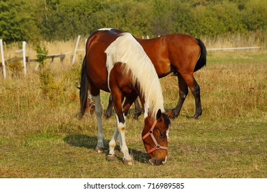 Horses on a farm in the autumn meadow