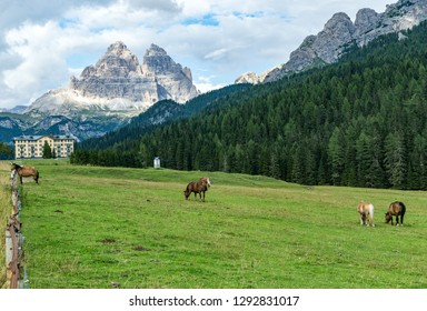 horses on the farm in the dolomites mountain, Italy