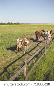 Horses on a farm in summer day
