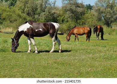 Horses on a farm in a summer meadow