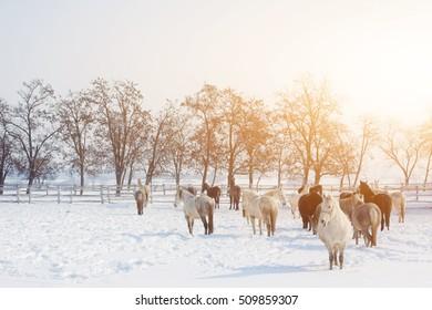 Horses on a farm on a sunny winter day
