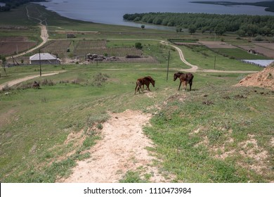 Horses on the field of grass. Horses are located in the foregroun. The house with the garden are located in the middle. The lake and a forest are located in the background.
