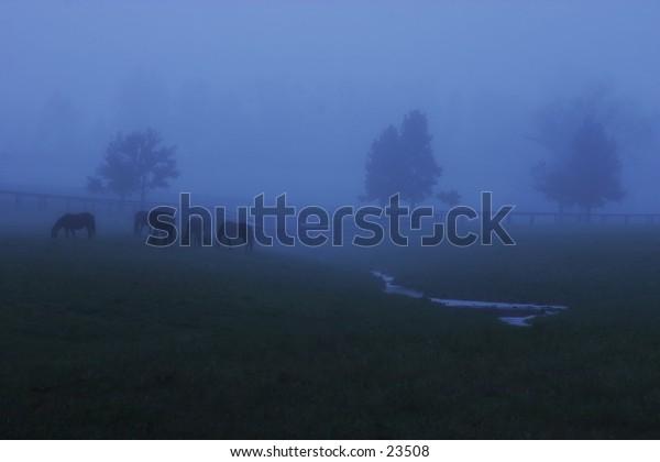 Horses on a foggy morning.