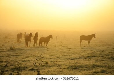 Horses on frozen grass in calm misty autumn morning with yellow sunset