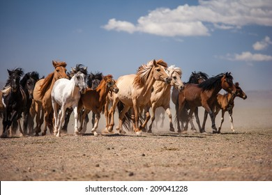 Horses on the Gobi Desert