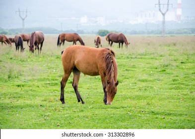 horses on the green field