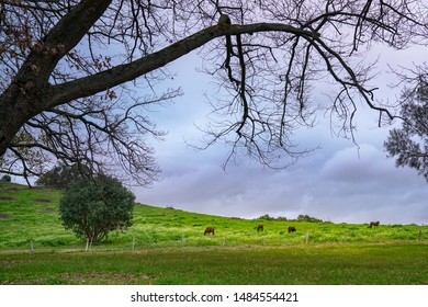 Horses on green meadow pastures. Country landscape during dusk.