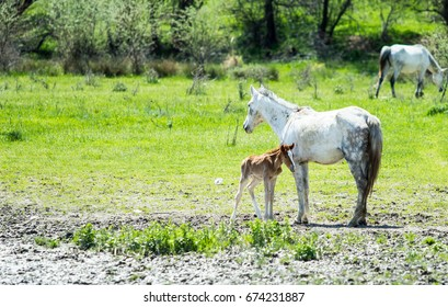 Horses on green pasture