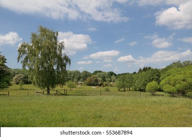horses on green pasture with forrest in background on sunny day