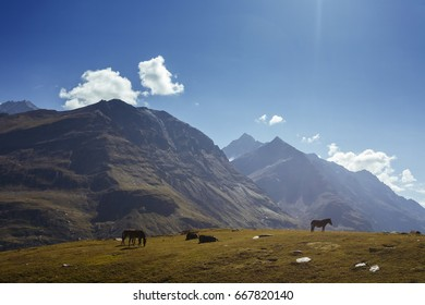 horses on the hill with mountain background, India
