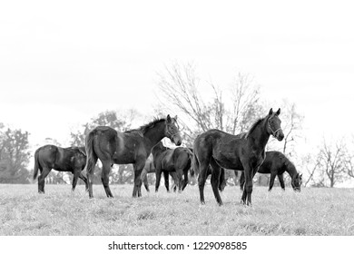 horses on Kentucky farm