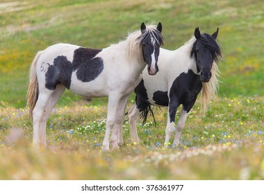 Horses on lush pasture in the spring