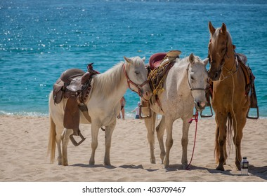 Horses on a Mexican beach resting while they wait for tourists to ride them.