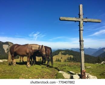 Horses on a mountain