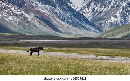 Horses on mountain plateou