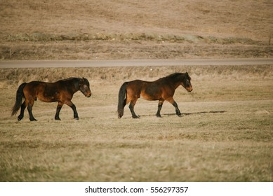Horses on the mountain tops