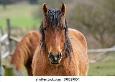 Horses on pasture