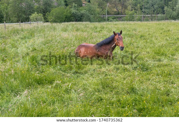 Horses on a pasture. Animals grazing. Wild beauty. Horse on the grass. A farm in the countryside.