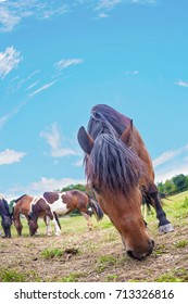 Horses on a pasture on the meadow in the countryside