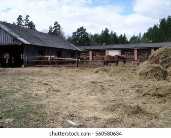 Horses on pasture. Stable.