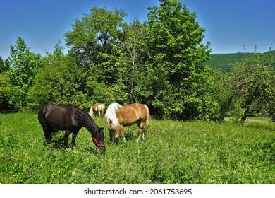Horses on pasture, Swabian Alb, Germany