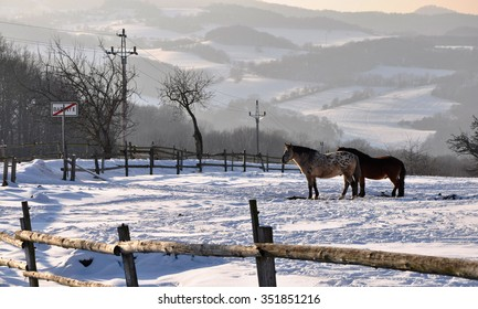 Horses on the snow