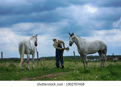 Horses on a stable and man on a summer day