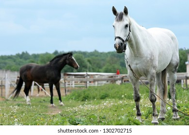 Horses on a stable on a summer day