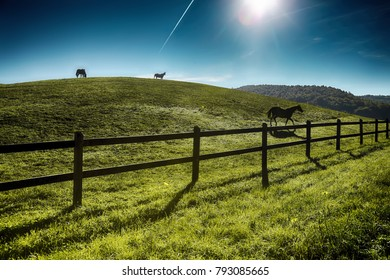 Horses outdoor in ranch at beaty landscape