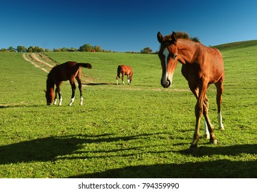 Horses outdoor in ranch at beauty landscape