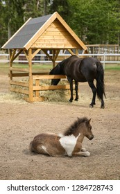 Horses in a paddock, Gotland Sweden.
