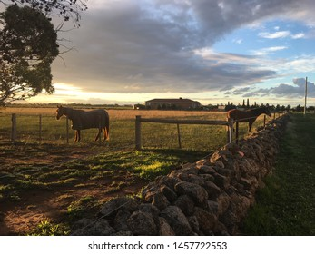 Horses in a paddock on the outer suburbs of Melbourne Australia