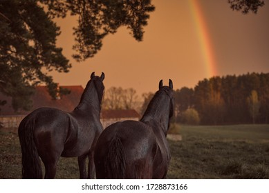 Horses in the pasture look at the rainbow