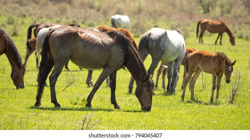 Horses in the pasture in the spring
