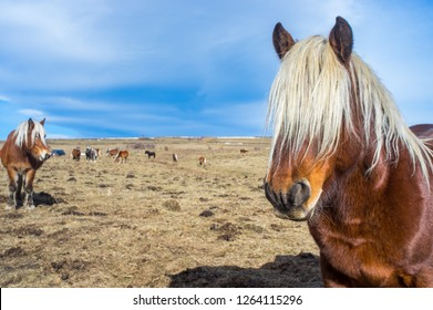 Horses pastures in the mountain valley, in Pyrenees, in Llo, Pyrenees-Orientales, France