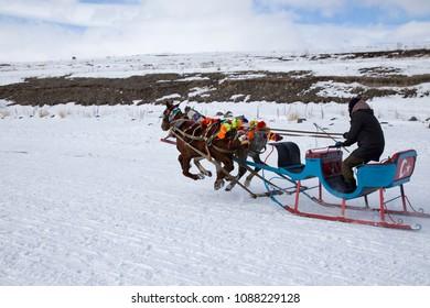 Horses of phaeton running at full gallop on the frozen Cildir Lake (Cildir Golu) in Ardahan nearby Kars, Turkey