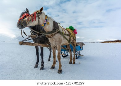Horses of phaeton running at full gallop on the frozen Cildir Lake (Cildir Golu) in Ardahan nearby Kars, Turkey