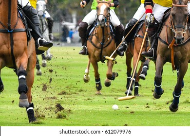 Horses Polo Run In The Game.
