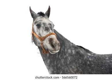 Horse's portrait isolated on white background. Horses on the farm