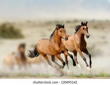 horses in prairies