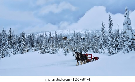 Horses pulling red carriage in winter forest. Tourist attraction in Big White.  Kelowna. Winter forest covered with snow after snowstorm. Big White Ski Resort. Ocanagan. British Columbia. Canada.