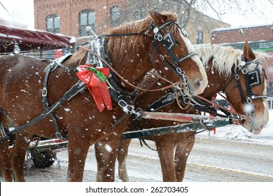 Horses pulling a tourist cart in Collingwood, Ontario in the snow