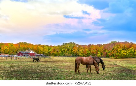 Horses quietly grazing in a pasture on a Maryland farm in Autumn with vivid fall colors in the trees