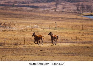 Horses racing on the field