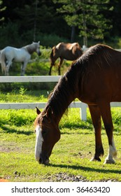 Horses in the Ranch