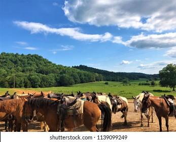 Horses ready for Riding