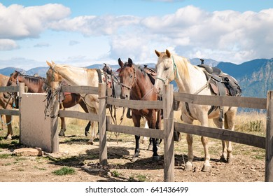 Horses rest tied to a fence during a mountain hike.