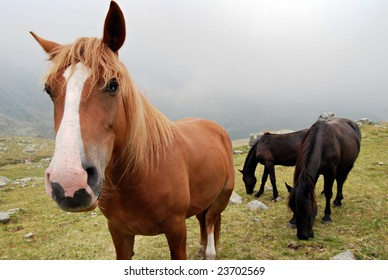 Horses in the Retezat National Park - Romania, Transylvania